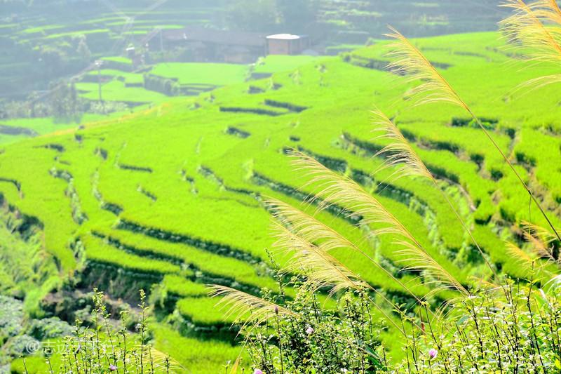 联合梯田:千年农耕文明历史,造就万亩魅力梯田 - 三明
