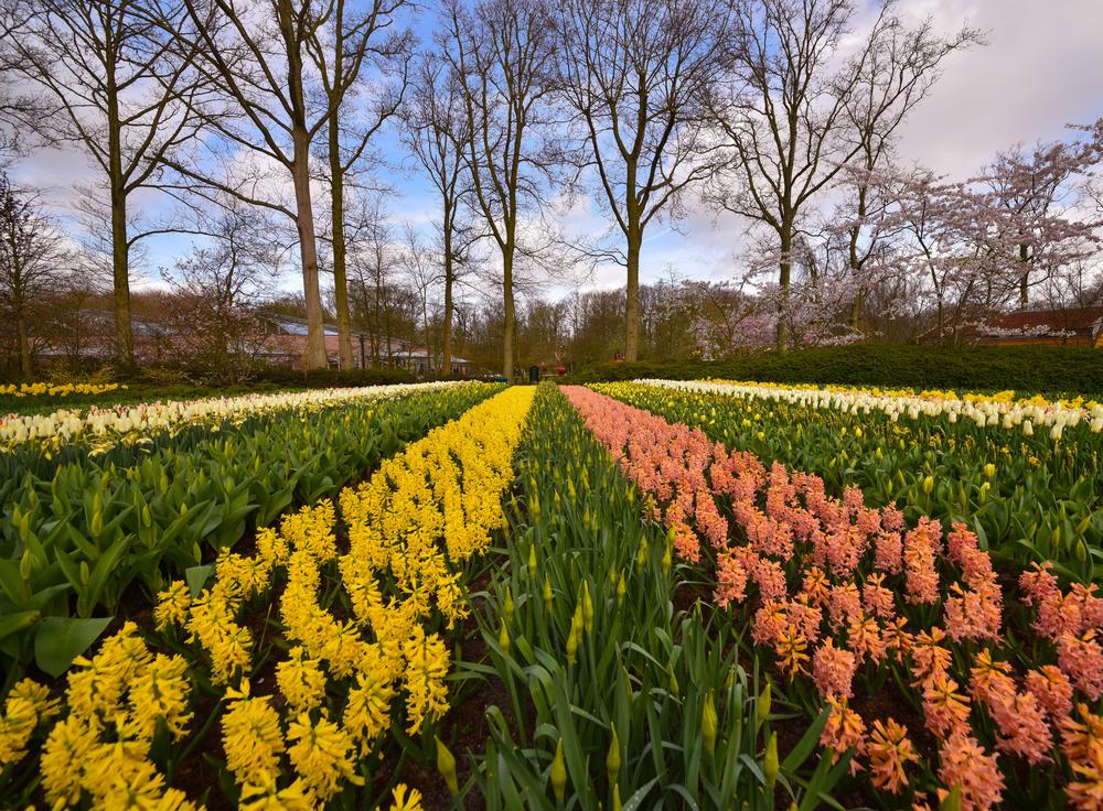 荷兰阿姆斯特丹+比利时布鲁塞尔+法国巴黎10日8晚自由行·三国连游 玩转鲜花王国  浓情巧克力 甜蜜马卡龙