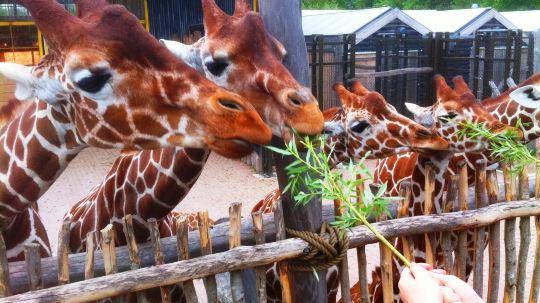 欧美zooskool系列_zooskool各种动物大全_zooskool各种动物汇总